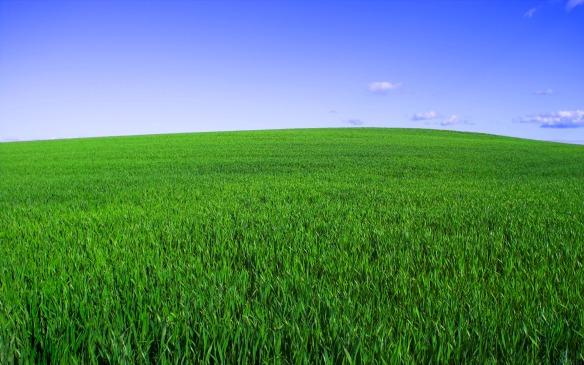 Corn fields in Denmark